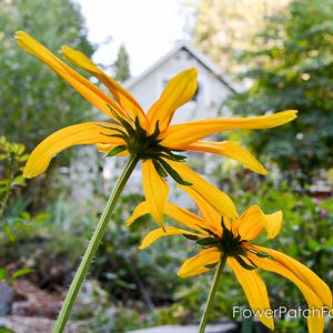 my-garden-in-september-4-of-36