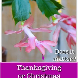 salmon pink thanksgiving cactus with text overlay, Thanksgiving or Christmas Cactus.