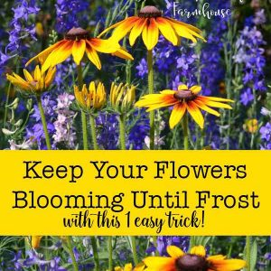 Keep your summer flowers blooming all season long well into Fall!