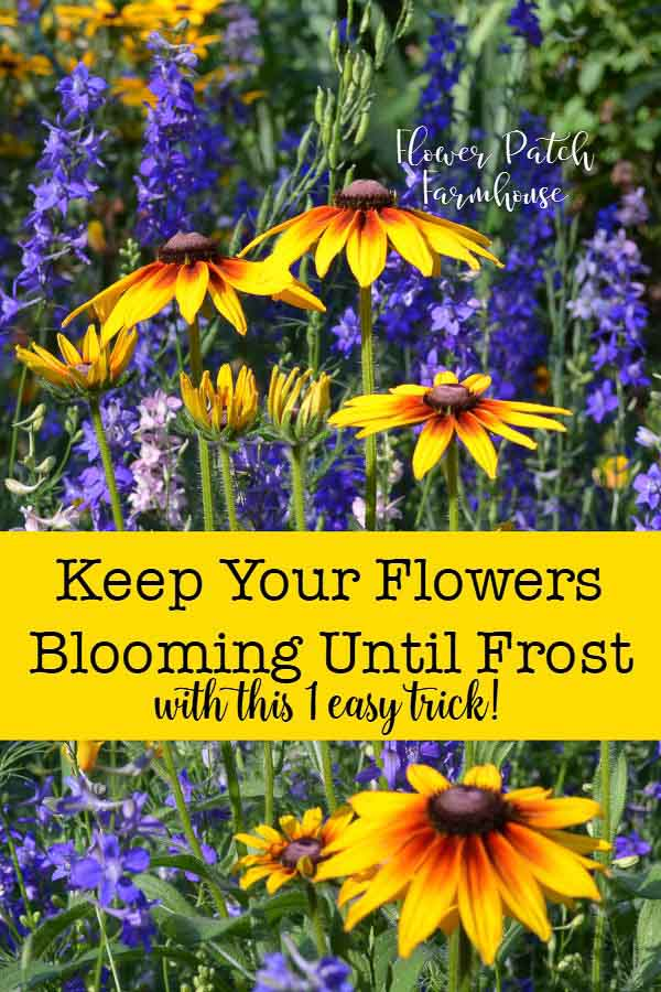 Rudbeckia and Larkspur in bloom with text overlay, Keep your summer flowers blooming all season long well into Fall! Flower Patch Farmhouse dot com