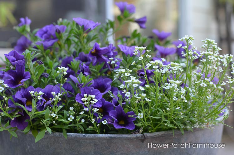Galvanized tubs and buckets container garden