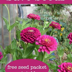 Pink zinnias in wine barrel with text overlay, how to save seeds