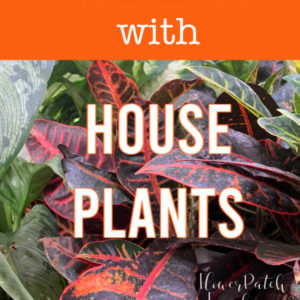 house plants with text overlay, Clean your air with house plants, flower patch farmhouse