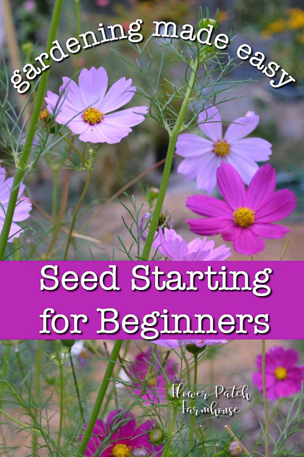 Pink and fuchsia Cosmos flowers with text overlay, Seed Starting for Beginners, Flower Patch Farmhouse