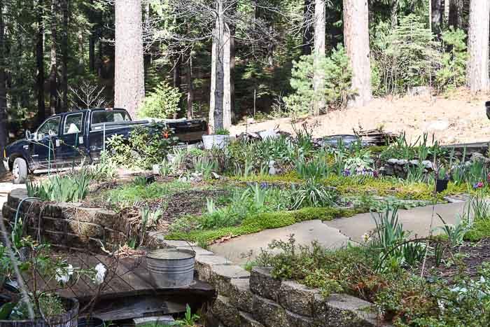 front garden left of sidewalk Flower Patch Farmhouse, Garden Journal April 15