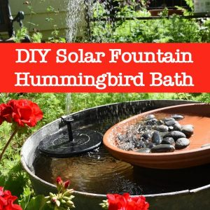 DIY hummingbird bath fountain tub