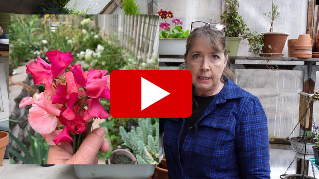 sweet peas and pamela groppe with video play button overlay