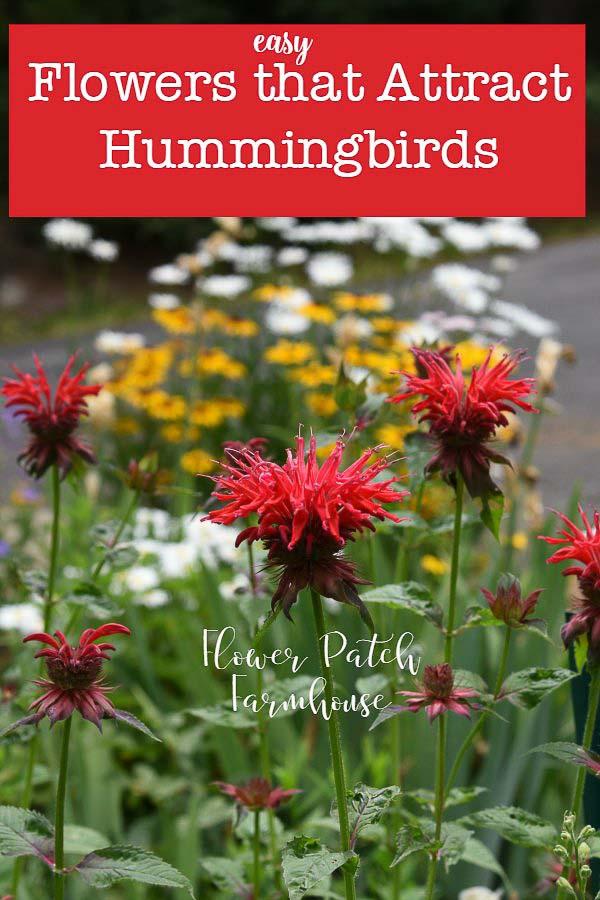 Bee Balm, flowers that attract hummingbirds to my garden
