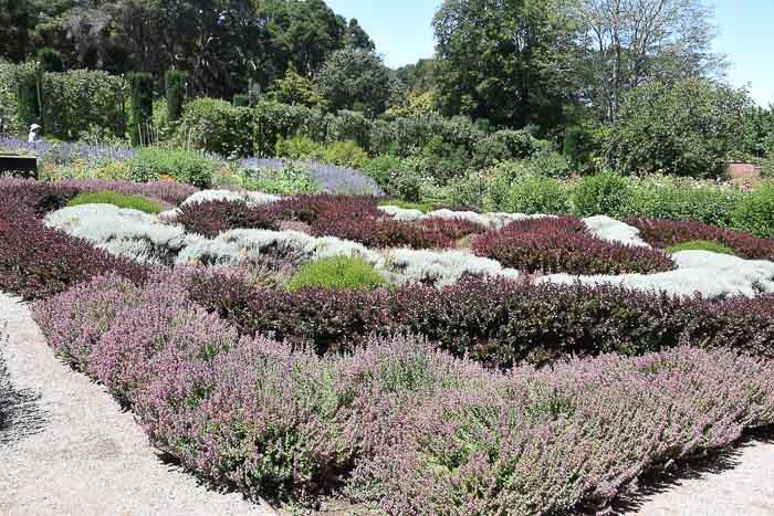 Filoli knot garden