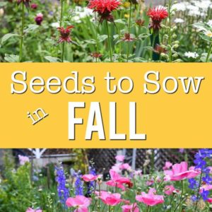 Bright flowers blooming after being seeded in Fall. Text overlay, Seeds to Sow in Fall, Flower Patch Farmhouse