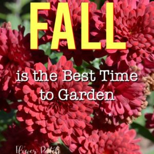 red mums with text overlay, Why Fall is the Best Time to Garden, Flower Patch Farmhouse