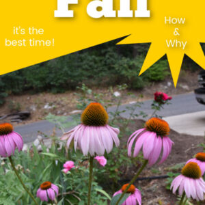 Echinacea Purple Coneflower with Text overlay, Fall is the best time to garden, flowerpatchfarmhouse.com