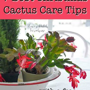 Christmas cactus blooming in centerpiece, FlowerPatchFarmhouse.com
