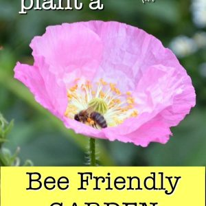 pink poppy with bee and text overlay, How to Plant a bee friendly garden, Flower Patch Farmhouse