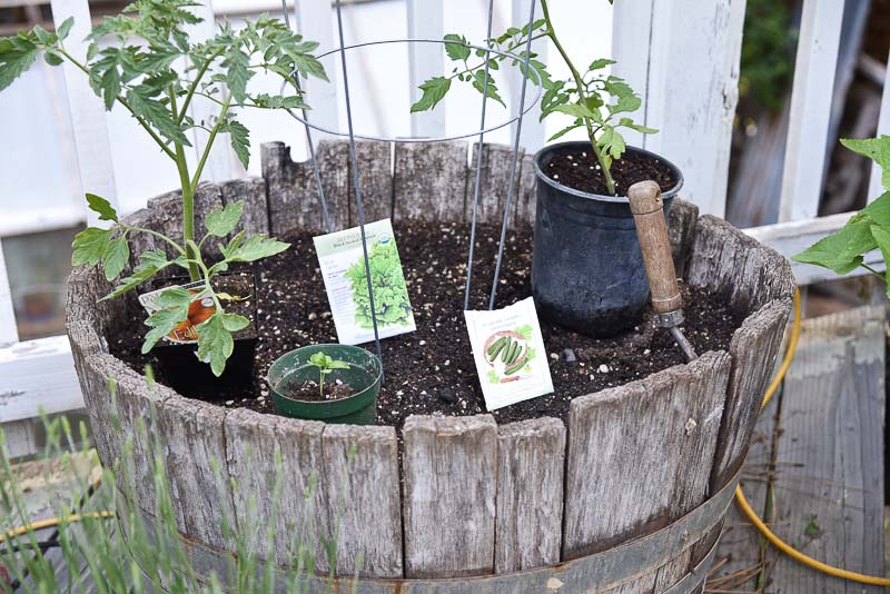 half wine barrel filled with soil, plants and seed packets sit on top of soil