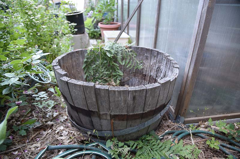 half wine barrel to plant a container salad garden