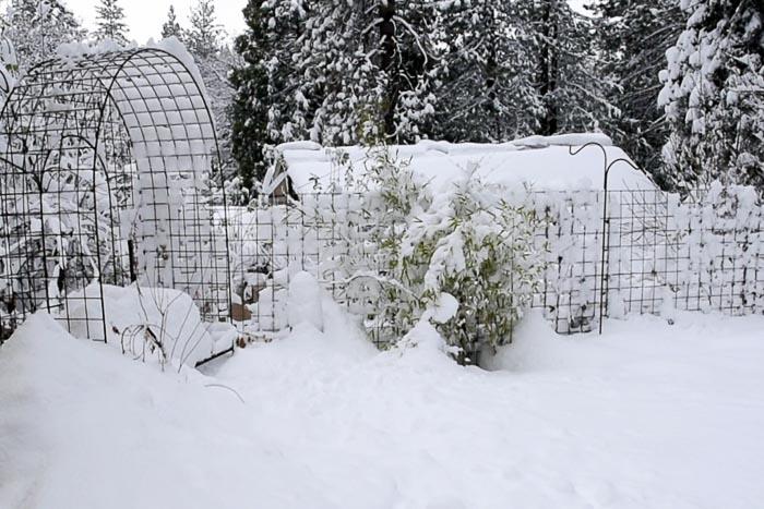snow on Secret Garden Flower Patch Farmhouse
