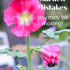 bright pink hollyhocks with text overlay, 5 common gardening mistakes you may be making! Flower Patch Farmhouse