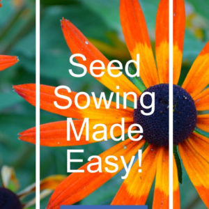 Black eyed susan with text overlay, Seed Sowing Made Easy, find out how