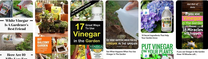 Pinterest images of vinegar use in garden