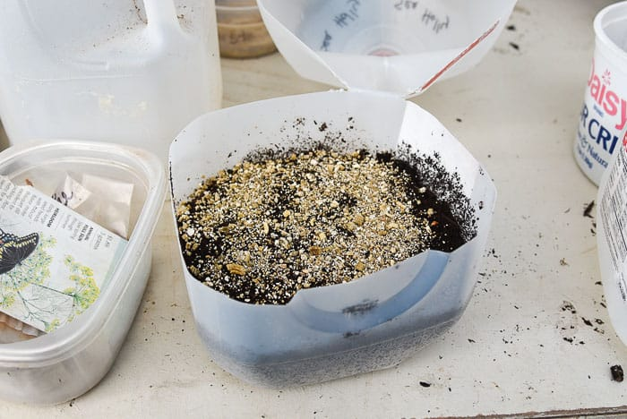winter sowing seeds filled with soil