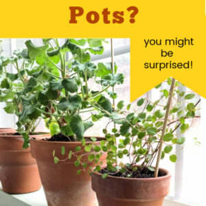 plants in terra cotta pots on window sill with text overlay: why use terra cotta pots? you might be surprised, Flower Patch Farmhouse