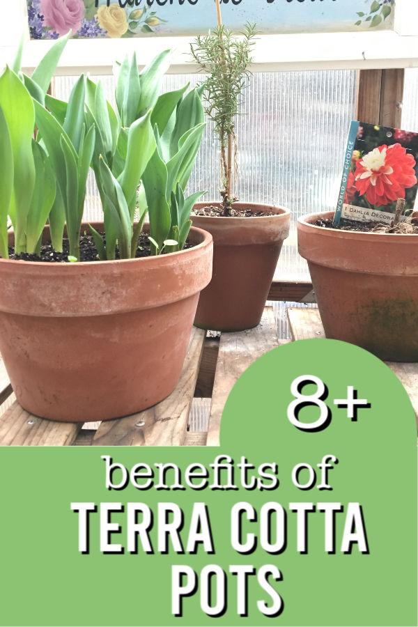 terra cotta pots filled with plants with text overlay, 8 plus benefits of Terra Cotta pots