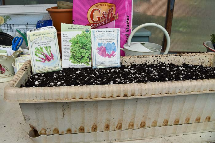 seeds to sow in a Container Vegetable Garden