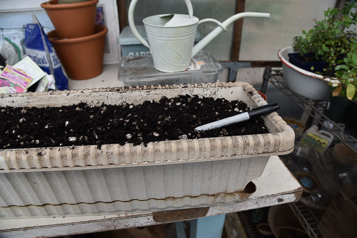 creating a seed drill to sow seeds in a Container Vegetable Garden