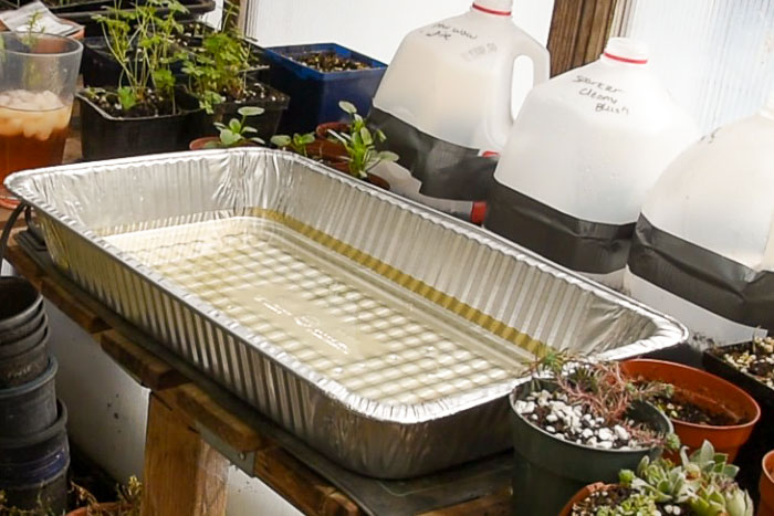 recycled aluminum pan used as a bottom water tray for seed starting