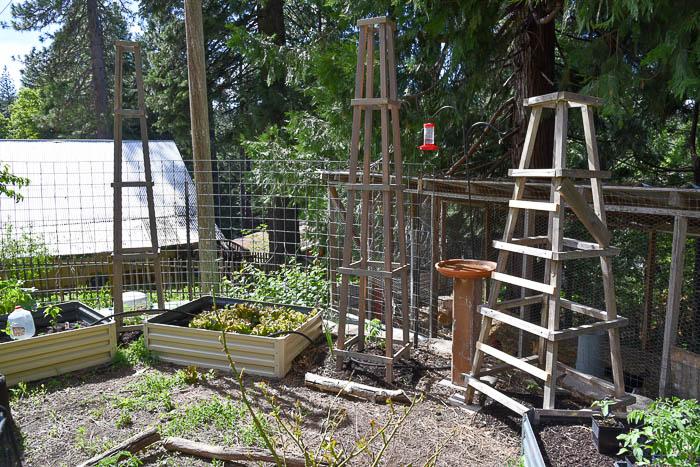 DIY tomato support obelisks in the garden