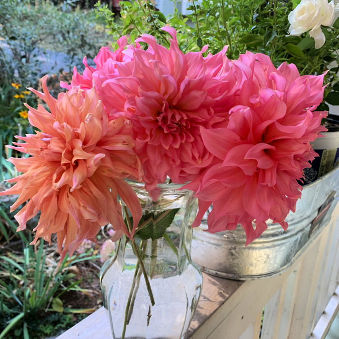 Dahlias grown in containers in a bouquet