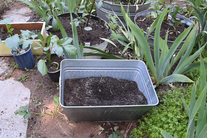 sand added to potting soil to plant dahlias in pots