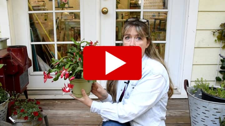 Pam of Flower Patch holding blooming zygo cactus with play button