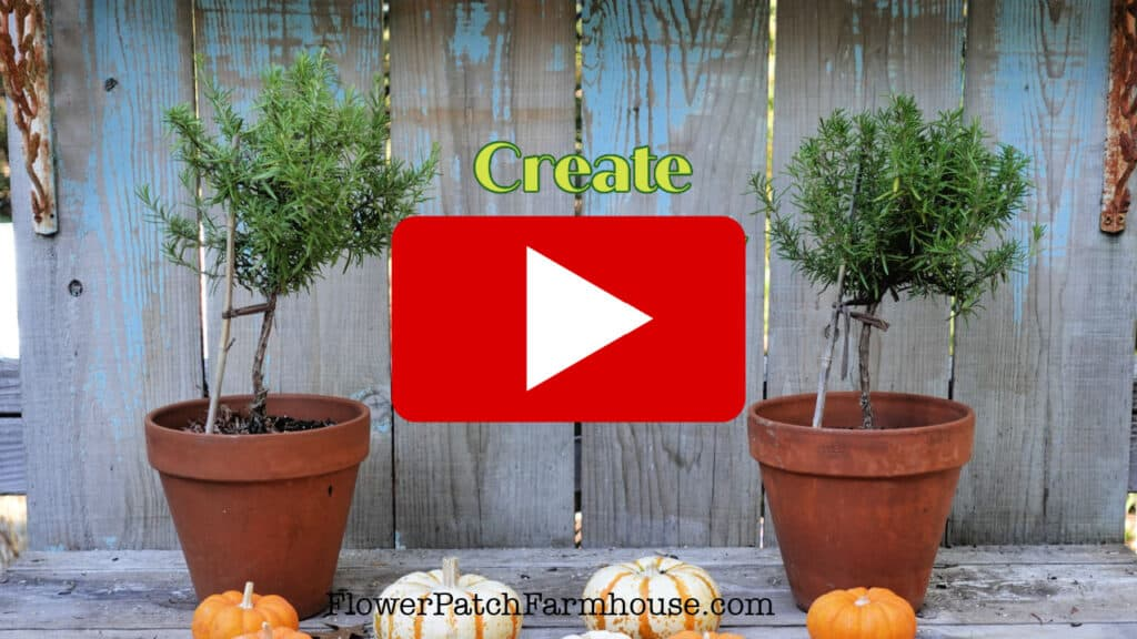 Rosemary topiary with red play button overlay