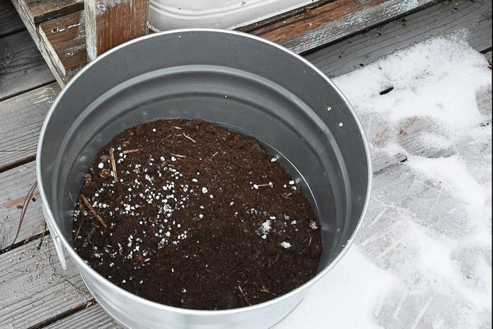 potting soil in pot for bulb planting