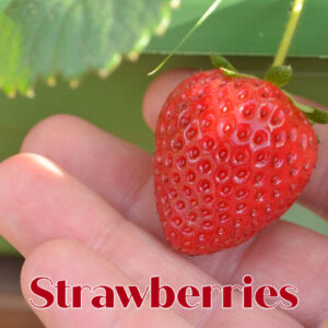 strawberry in a hand