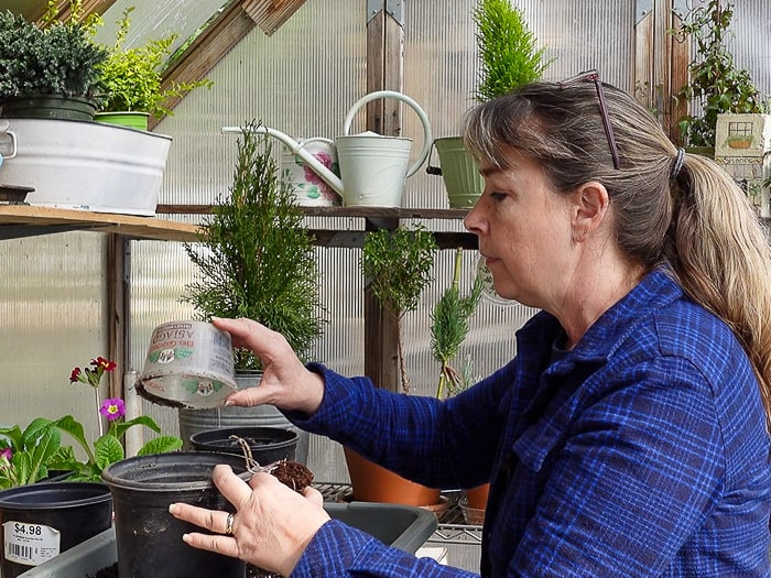 Pam filling one gallon container with potting soil