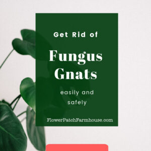 house plant with text overlay, How to Get Rid of Fungus Gnats, safely and easily, Flower Patch Farmhouse dot com Learn More