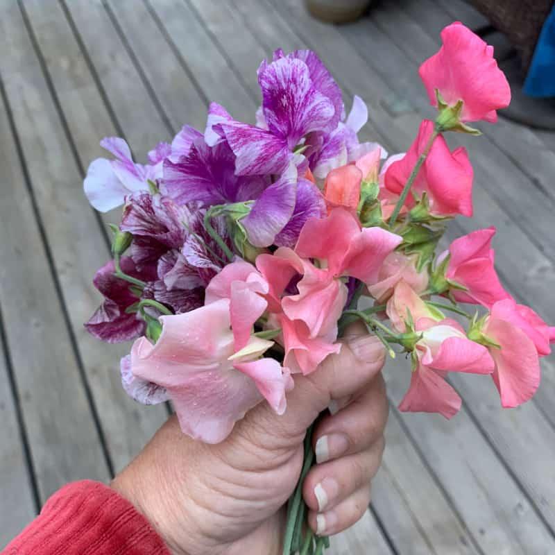 Sweet Pea bouquet pick July
