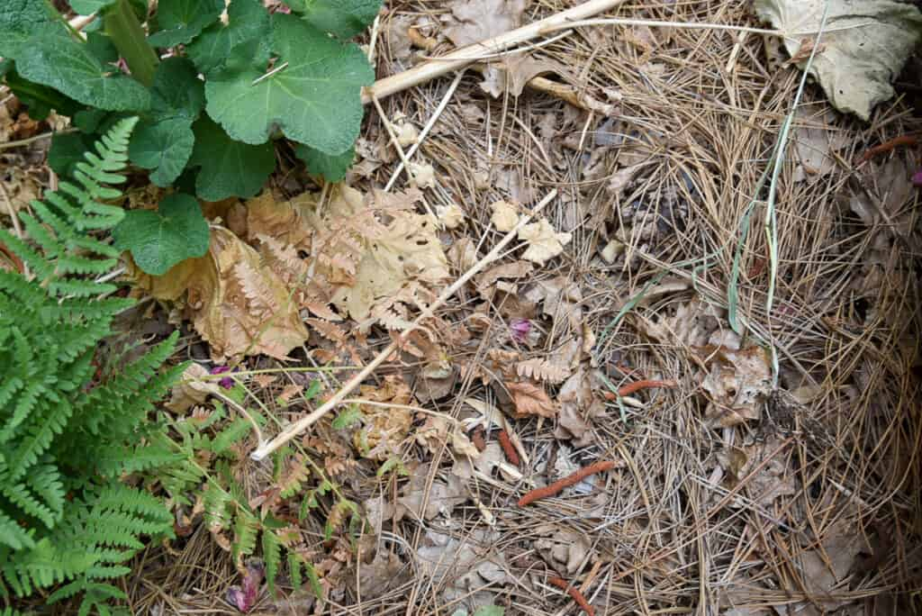 dried leaves and plant debris before it turns into leaf mold
