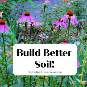 echinacea, black eyed susans in garden with text overlay, easy Build Better Soil! Flower Patch Farmhouse dot com