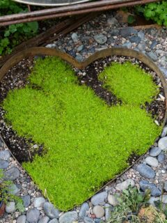 Scotch Moss ground cover shaped into a heart surrounded by rock and gravel, Flower Patch Farmhouse